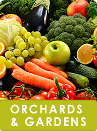 Orchards and Gardens